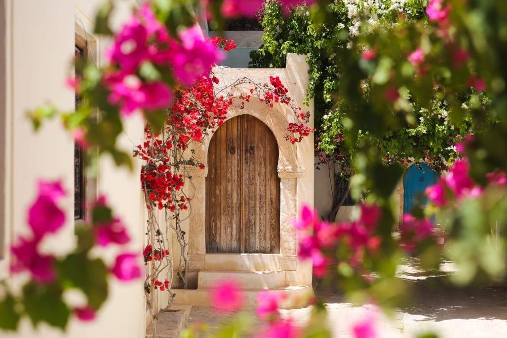 Djerbahood gėlės, Giedrius Matulaitis
